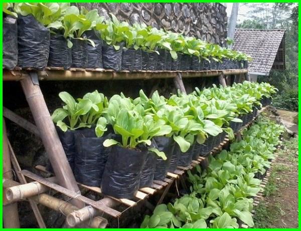Kebun Kecil Yang Cantik Di Depan Maupun Belakang Rumah