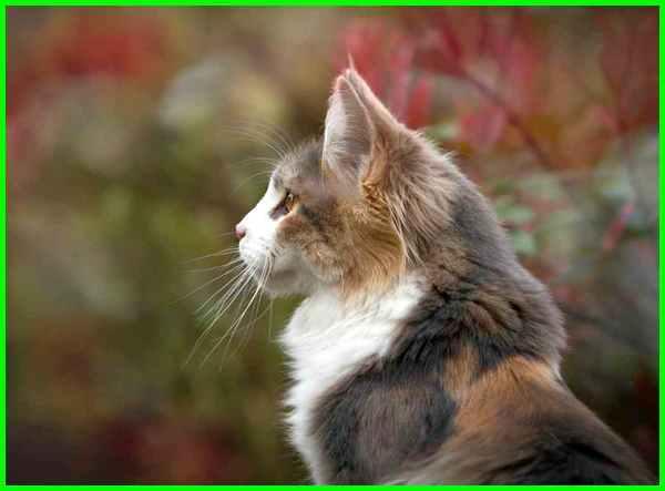 nama kucing jepang, nama kucing jepang beserta artinya, nama kucing bahasa jepang dan artinya, nama kucing jepang dan artinya, nama kucing jepang lucu, nama nama kucing jepang rumah, nama kucing jepang unik, nama kucing versi jepang, nama kucing jepang yg bagus, nama kucing yang jepang