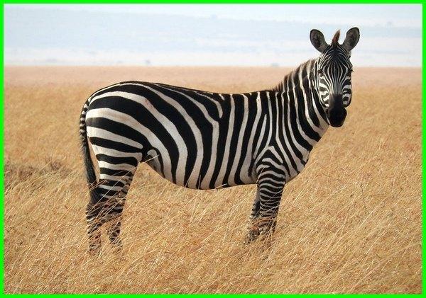 Unduh Kumpulan Koleksi Gambar Flora Dan Fauna Yang Ada Di Benua Afrika Keren Gratis