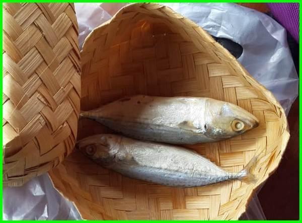 jenis ikan asin peda, jenis ikan air asin, 5 jenis ikan air asin, ikan asin jenis layur, jenis ikan asin yg enak, gambar jenis ikan asin, jenis ikan yang dijadikan ikan asin, jenis ikan untuk membuat ikan asin