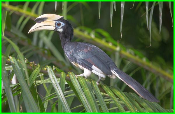 hewan di negara singapura, hewan langka negara singapura, hewan dari negara singapura, hewan endemik negara singapura, hewan asli negara singapura, binatang pakong singapura