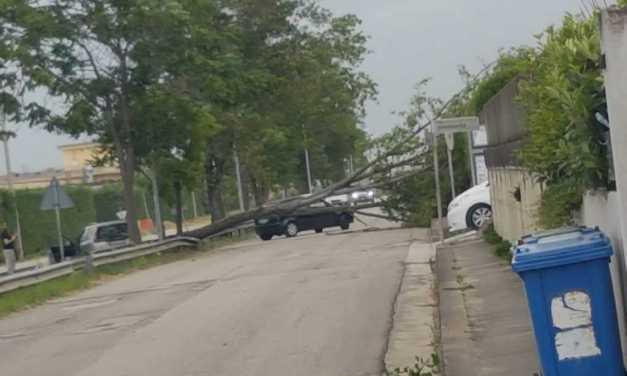 FOTO – NOTIZIA | Maltempo, primi disagi: albero caduto in mezzo alla strada a Casemolino di Castellalto