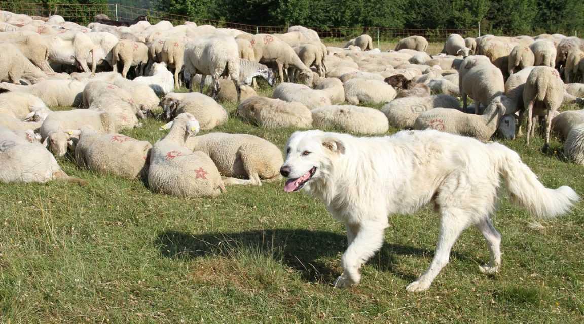 MIT e Condotta Slow Food Val Vibrata-Giulianova a sostegno dei pastori teramani