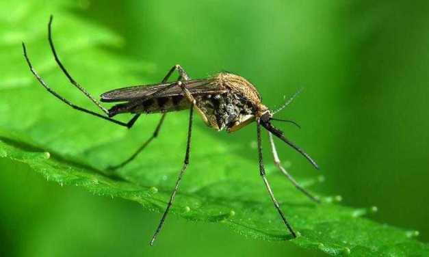 Giulianova, interventi trattamento adulticida contro le zanzare: ecco la guida del Comune