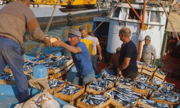 Pesca: dopo lo stop finalmente torna sulle tavole il pesce fresco dell'Adriatico