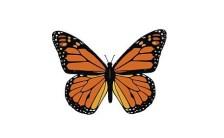 ワンネスに還る旅と、モナーク蝶の大飛行