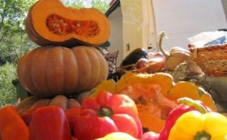 食欲の秋到来!~地元の食材を楽しむ~