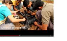 タールのプールに落ちて動けなくなった犬を、インドの動物愛護団体が必死の救助を試みる!!