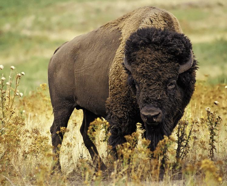 久慈悟子が教えるアニマルエッセンスPart.7〜インディアンから重宝されている動物の持つ力とは〜