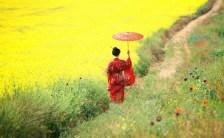 日本伝統色に秘められた神秘