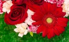 《幣立―ジュディスさんが「私の神社」と呼ぶ南九州の聖地》〜慈愛の功労者、ジュディス・カーペンターPart.5〜