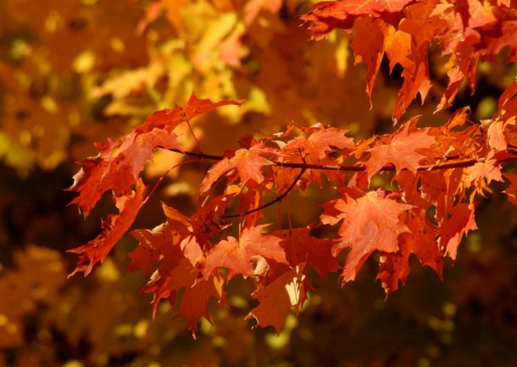 秋分を迎えた今、本来の自分へと戻っていくのに良い時期です……これも風水