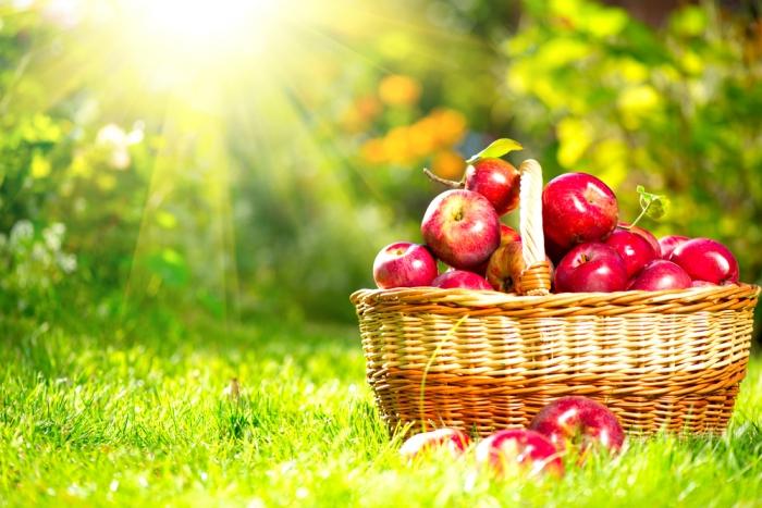 今が旬! リンゴを食べて元気に美しく過ごそう!<br>〜ペクチンは加熱により9倍も効果がアップ〜
