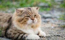 猫がゴロゴロと鳴き声を出す時、人間を癒す周波数が出ていることが科学的に証明される