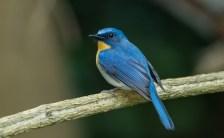 「瞑想で見つけるサイン」<br> 幸せの青い鳥を探す心の旅!
