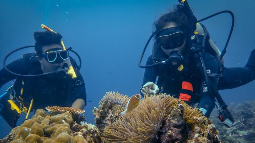Open water dive with a student and an PADI instructor