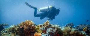 Leisure dives above the tremendous reefs of El Nido