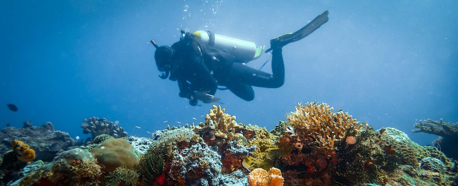 Plonger dans la l'archipel de Bacuit est relaxant et saisissant
