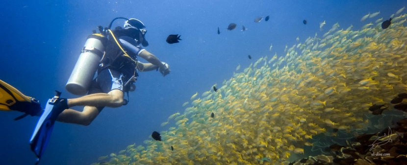 Get a fun dive in El Nido
