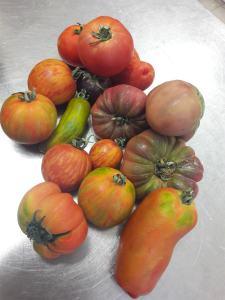 Tomates anciennes El gusanillo concept