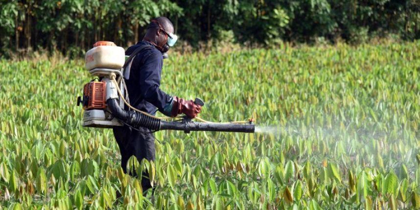 Le brevet qui pourrait tuer Monsanto