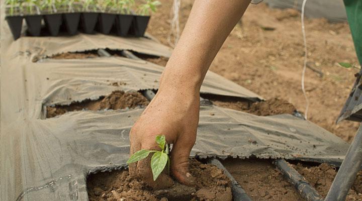 Pourquoi les jeunes agriculteurs passent au bio?