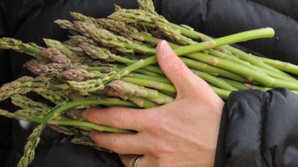 asparagus 2 0514