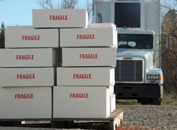 gp boxes 1114