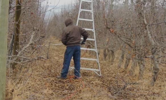 pruning II 0115