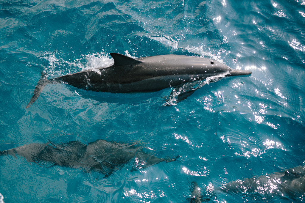 Swimming with Dolphins | Sailing on The Big Island | Honu Sail Charters | Sailing Kona Hawaii | Untraditional Holiday Celebrating | Sailing for Christmas | elanaloo.com