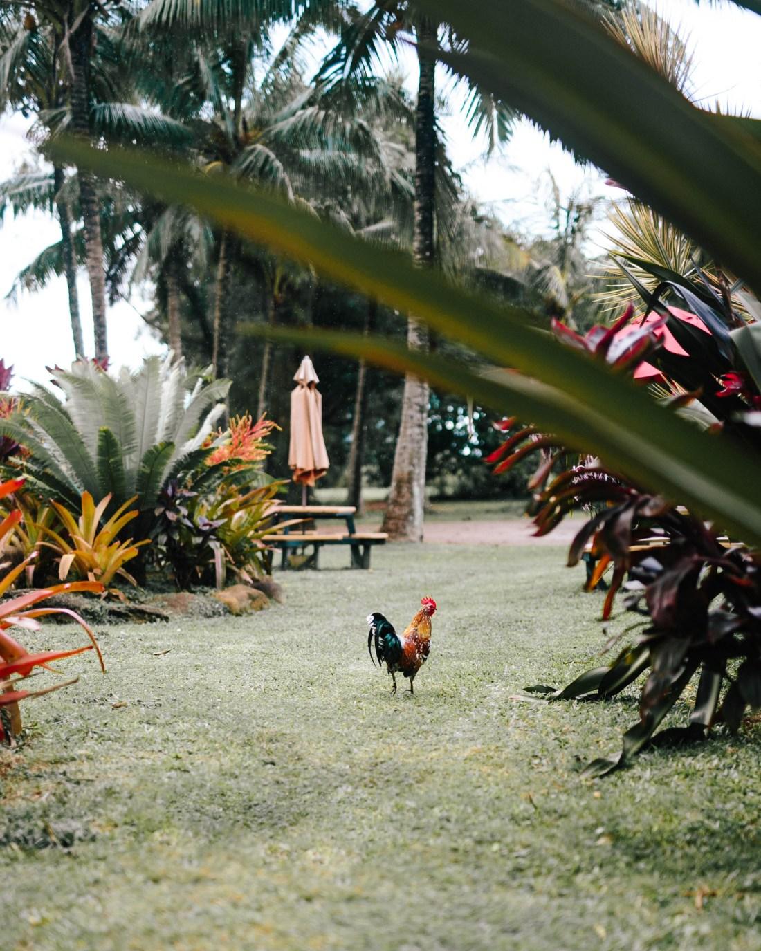 Kauai Bed + Breakfast | Places to Stay in Kauai | The Palmwood | A Curated Lodging Experience | Travel Blogger's Travel Guide to Kauai | Kauai The Chicken Island via @ elanaloo + elanaloo.com