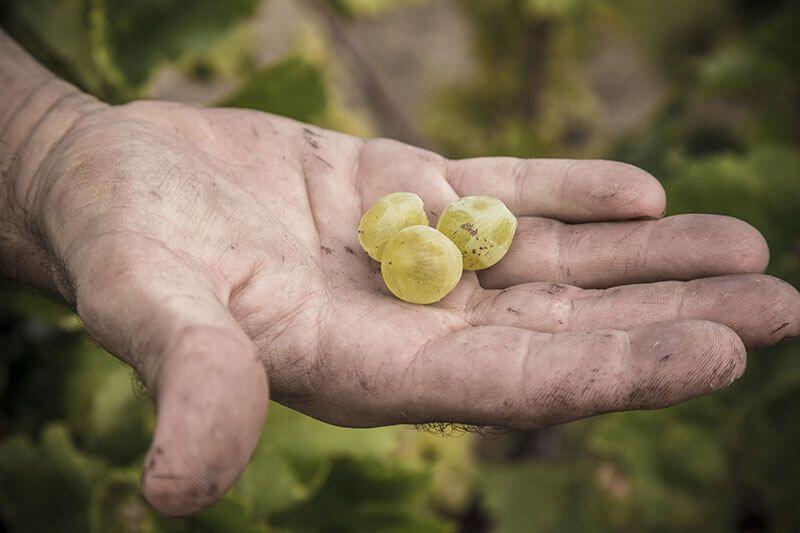 Los vinos «cósmicos» de Salvador Batlle
