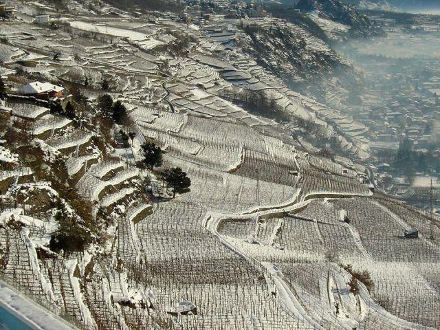 Viñas de ARPEPE