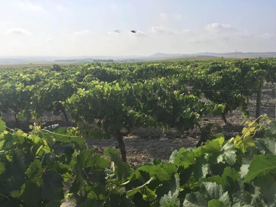 Viñas de moscatel de 4ojoswines