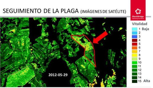 Imagen satélite de las zonas afectadas por lymantria