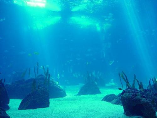 oceano - Los océanos están en peligro