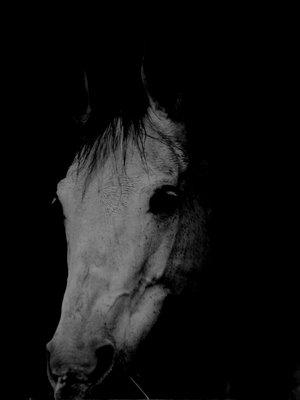 caballo2 - 25 caballos cayeron reventados en El Rocío esta primavera