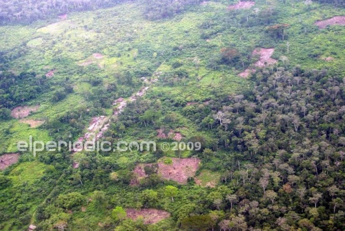 bosque de alimentos - bosque-de-alimentos
