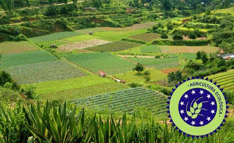 cultivos agricultura ecologica - cultivos-agricultura-ecologica
