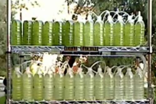 biorreactor con algas