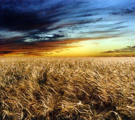 campo - La vida sigue...