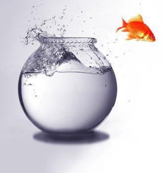 pez volador - Pez volador