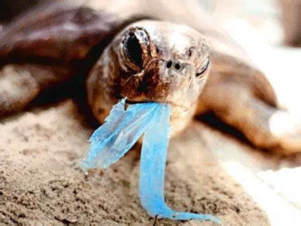 tortuga come bolsa - Un trillón de bolsas de plástico: a dónde van y qué podemos hacer