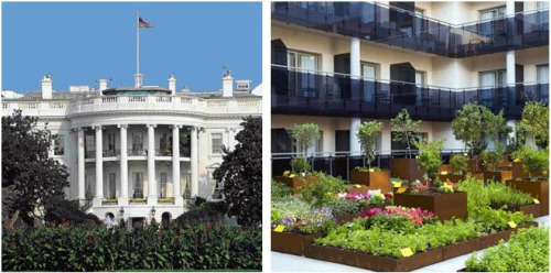 casa blancahuerta - huerta casa blanca