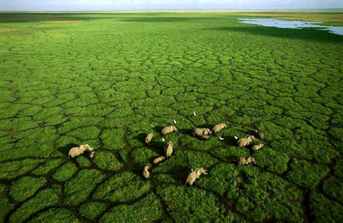 elefantes camino - Caminos lejanos
