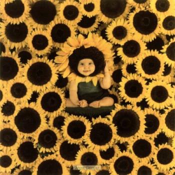geddes anne sunflower wall 6600032 - Deducción feliz