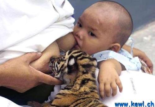lactancia animal2 - lactancia entre especies