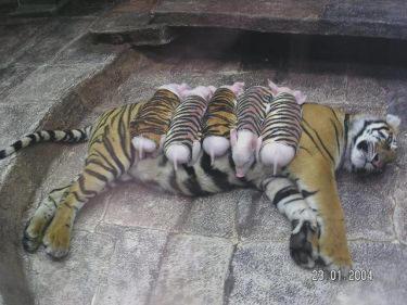 lactancia entre especies