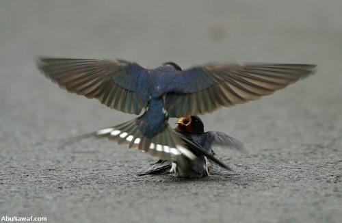 pajaro2 - amor y compasión entre pájaros