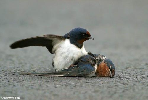 pajaro3 - amor y compasión entre pájaros